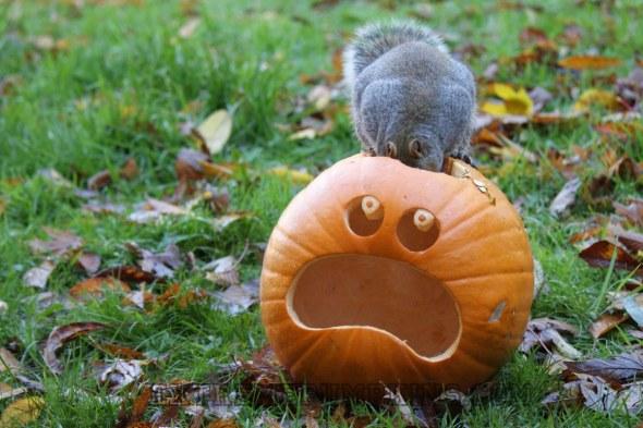 2013-extreme-pumpkins-3